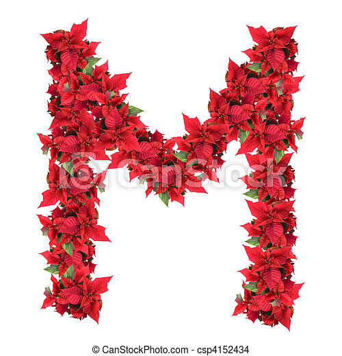 letter from red christmas flowers isolated on white - csp4152434