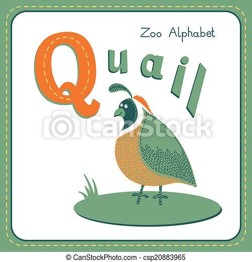 letter q quail alphabet with cute animals vector illustration