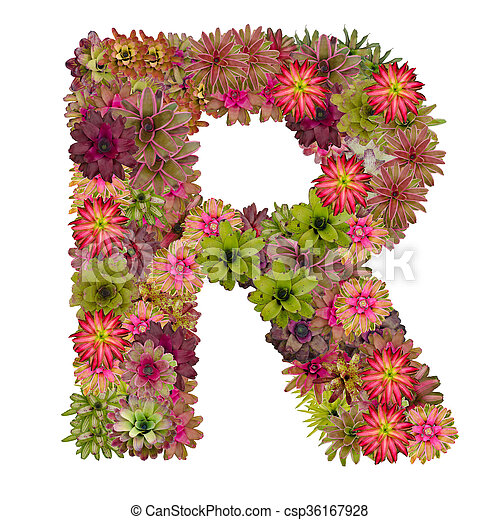 Letter r made from bromeliad flowers isolated on white background letter r made from bromeliad flowers isolated on white background csp36167928 altavistaventures Choice Image