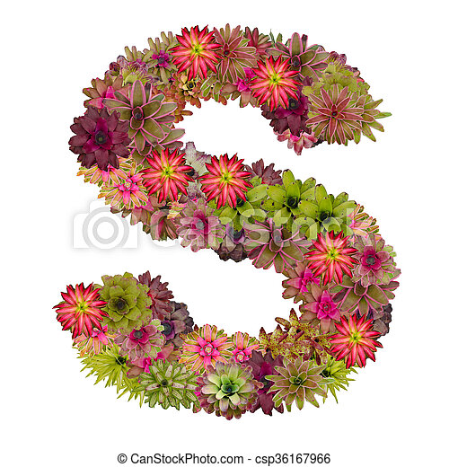 letter s made from bromeliad flowers isolated on white background csp36167966