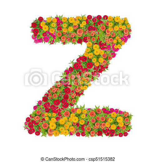 Letter Z alphabet made from zinnia flower ABC concept type as  logo Typography design with clipping path