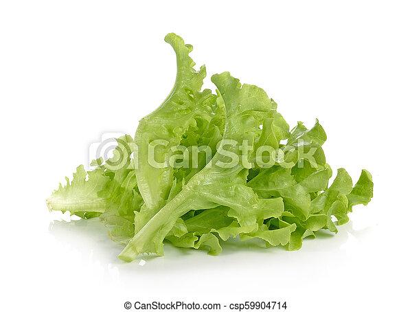 lettuce on white background - csp59904714