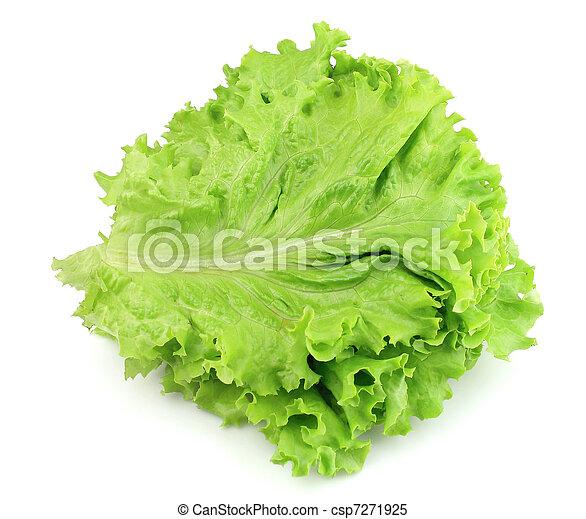 lettuce on white background - csp7271925