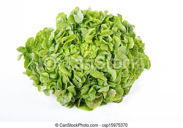 lettuce - csp15975370