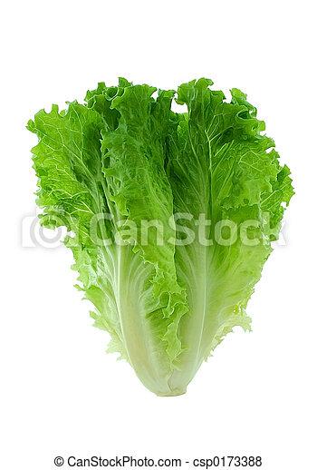 Lettuce - csp0173388