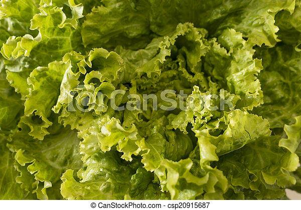 Lettuce salad, fragment. Abstract background. - csp20915687