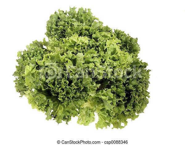 Lettuce - csp0088346