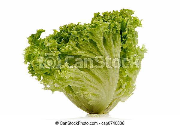 lettuce - csp0740836