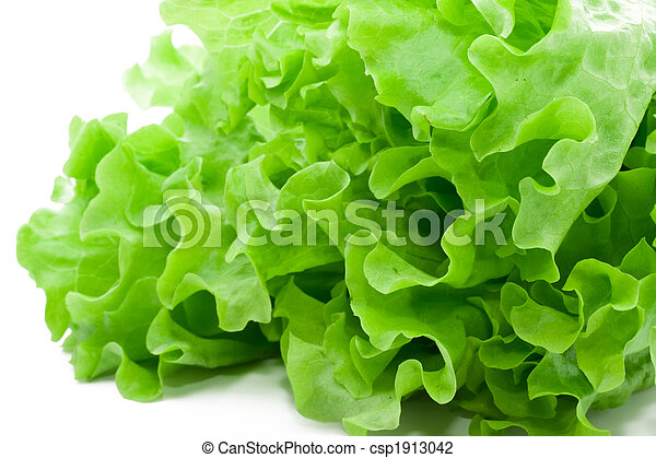 Lettuce - csp1913042