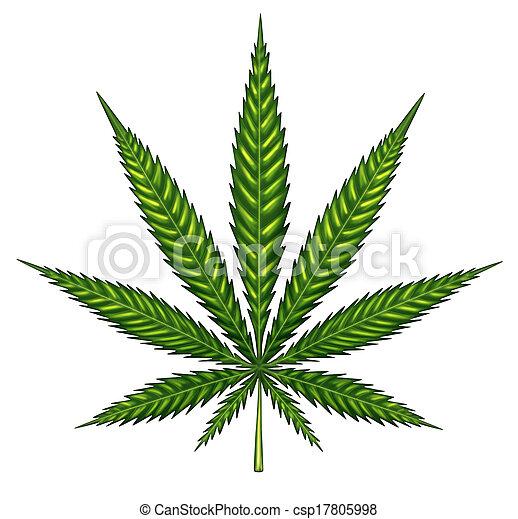 levél növényen, marihuána, elszigetelt - csp17805998