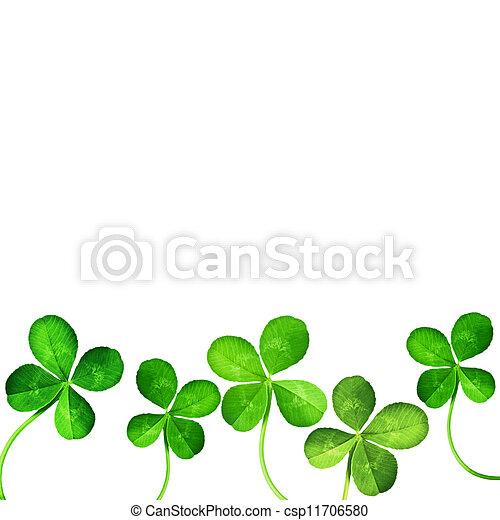 levél növényen, négy, lóhere - csp11706580
