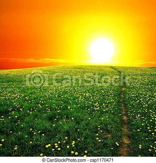 levers de soleil, pissenlit, champ - csp1170471