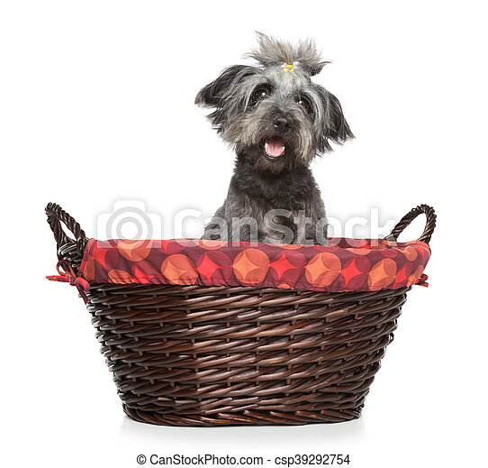 Lhasa Apso dog in wattled basket - csp39292754