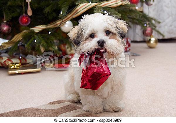 lhasa, puppy, kerstmis, apso - csp3240989