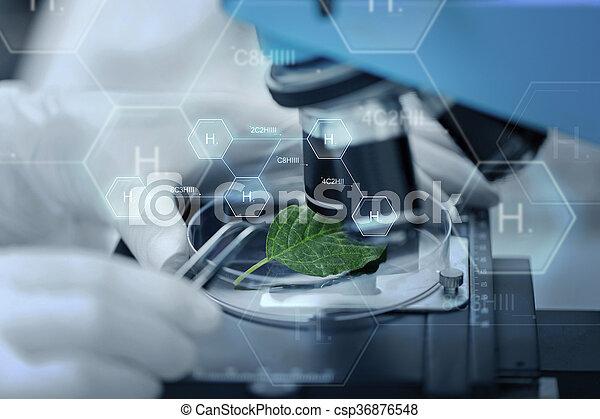 Liść do góry ręka mikroskop zielony zamknięcie chemia