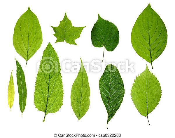 liście, zielony, odizolowany - csp0322288