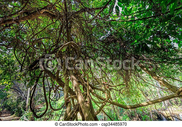 Lianas In Jungle Dense Tangled Lianas In The Thailand Jungle