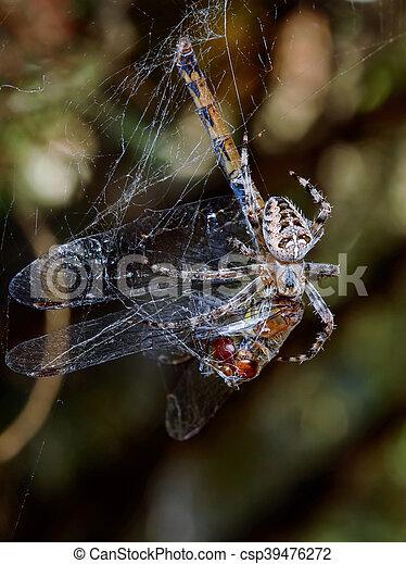 libellule, araignés, victime - csp39476272