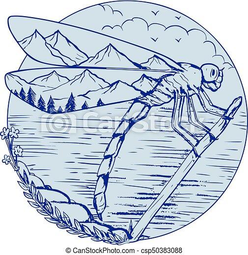 libellule, dessin, montagnes, ailes - csp50383088