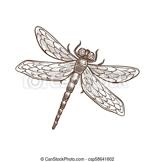 libellule, paires, fast-flying, deux, insecte, long-bodied, ailes, avide - csp58641602