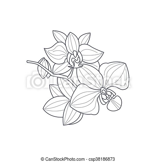 Libro colorear, flor, monocromo, dibujo, orquídea. Estilo, colorido ...