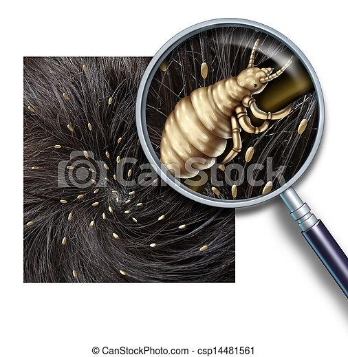 Lice Problem - csp14481561