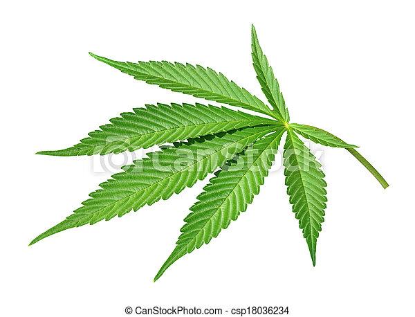 licença, marijuana - csp18036234