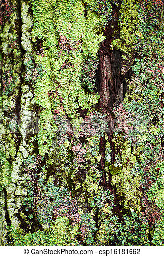 Lichen On Tree Trunk Multicolored Lichens Growing On Bark Of Tree