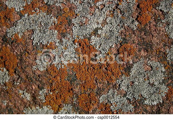 Lichens - csp0012554