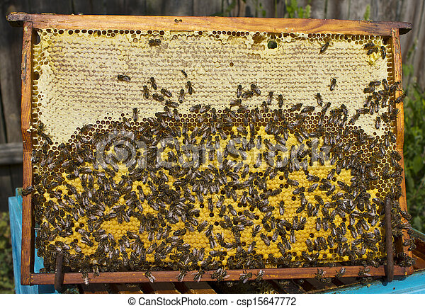 Life and reproduction of bees. - csp15647772
