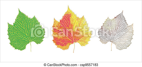 Life cycle of leaf - csp9557183