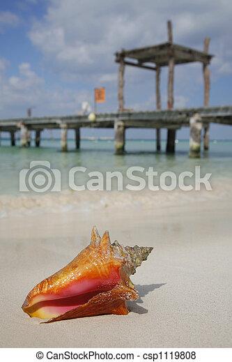 Life is a Beach (Conch) - csp1119808