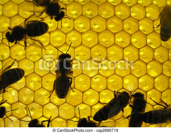 Life of insects. Bee on honeycombs. - csp2690719