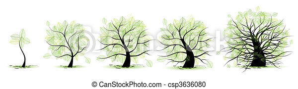 Life stages of tree: childhood, adolescence, youth, adulthood, old age - csp3636080