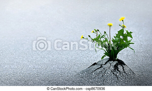 Life Triumphs Against All Odds - csp8670936