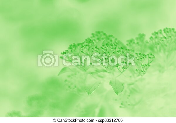 Light green blurred background with floral pattern - csp83312766