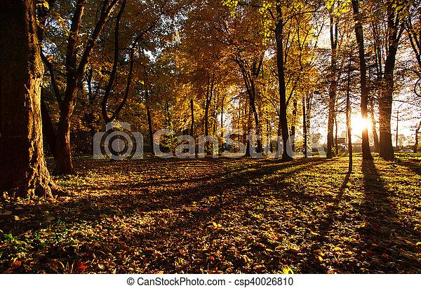 Light of the setting sun in autumn park - csp40026810