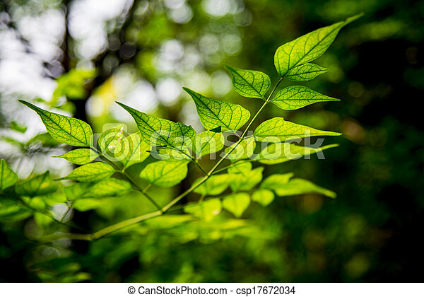 Light on green leave in the forest1 - csp17672034