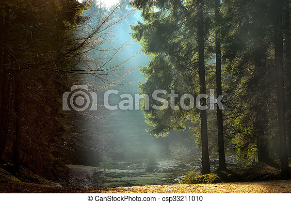 light rays through the trees . late autumn landscape , a walk through the woods near Brasov. Romania. Soft focus, blured background, low key, dark background, spot lighting, and rich Old Masters - csp33211010