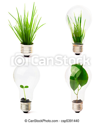 lightbulb with plant growing inside - csp5391440