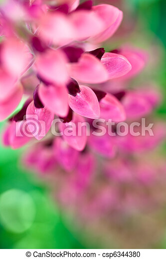 Lilac and pink flowers of lupines in summer - csp6344380