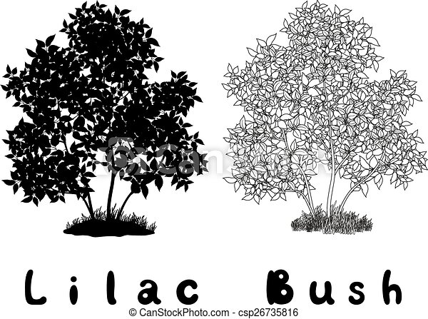 Lilac Bush Contours, Silhouette and Inscriptions - csp26735816
