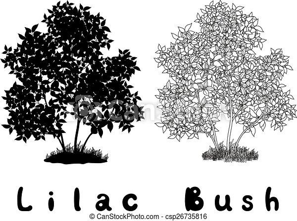 Lilac Bush Contours, Silhouette and Inscriptions - csp26735816