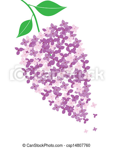 lilac - csp14807760