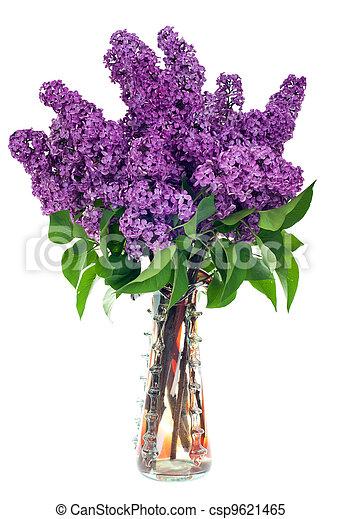Lilac in a vase - csp9621465
