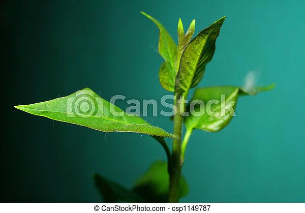 Lilac leaf - csp1149787