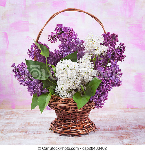 lilac on a beautiful background - csp28403402