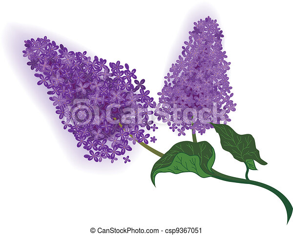 vector illustration of the lilac branch rh canstockphoto com lilac heart clipart lilac clip art black and white
