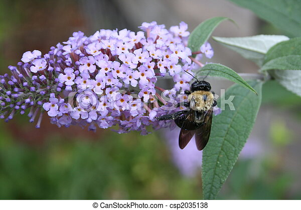 Lilac with Bumblebee 2 - csp2035138