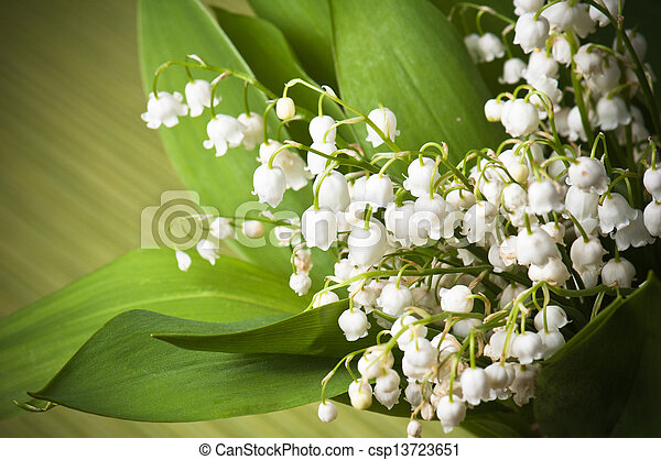 Lilies of the valley, close up - csp13723651